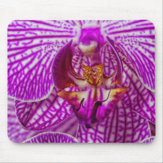 USA, Georgia, Savannah, Close-Up Of Orchid Mouse Mat