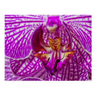 USA, Georgia, Savannah, Close-Up Of Orchid Postcard