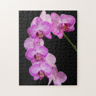 USA, Georgia, Savannah, Cluster Of Orchids 2 Jigsaw Puzzle