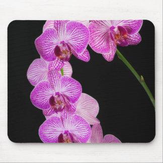 USA, Georgia, Savannah, Cluster Of Orchids 2 Mouse Mat