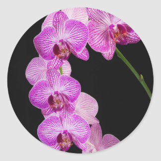 USA, Georgia, Savannah, Cluster Of Orchids 2 Sticker