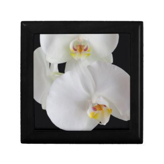 USA, Georgia, Savannah, Cluster Of Orchids Gift Box