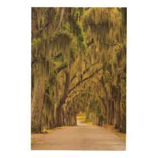 USA, Georgia, Savannah, Entrance Drive Wood Canvas