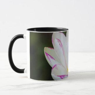 USA, Georgia, Savannah, Lootus Flower Blooming Mug