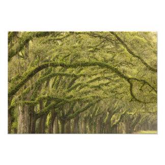 USA; Georgia; Savannah. Oak trees with Photo Art