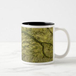 USA; Georgia; Savannah. Oak trees with Two-Tone Coffee Mug