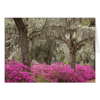 USA, Georgia, Savannah, Spring at Historic Card
