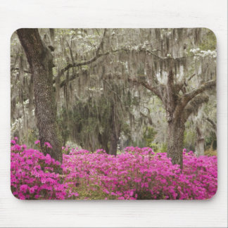 USA, Georgia, Savannah, Spring at Historic Mouse Mat