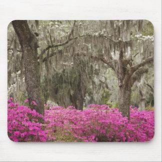 USA, Georgia, Savannah, Spring at Historic Mouse Pad
