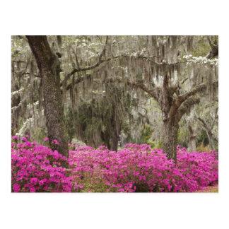 USA, Georgia, Savannah, Spring at Historic Postcard