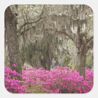 USA, Georgia, Savannah, Spring at Historic Square Sticker