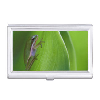 USA, Georgia, Savannah, Tiny Frog On A Leaf Business Card Holder