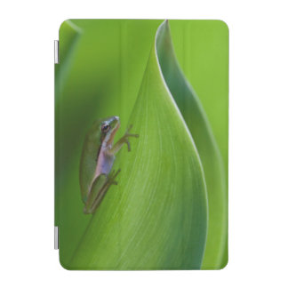 USA, Georgia, Savannah, Tiny Frog On A Leaf iPad Mini Cover