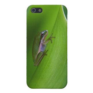 USA, Georgia, Savannah, Tiny Frog On A Leaf iPhone 5 Case