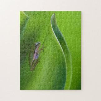 USA, Georgia, Savannah, Tiny Frog On A Leaf Jigsaw Puzzle