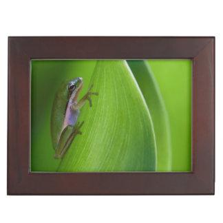 USA, Georgia, Savannah, Tiny Frog On A Leaf Keepsake Box
