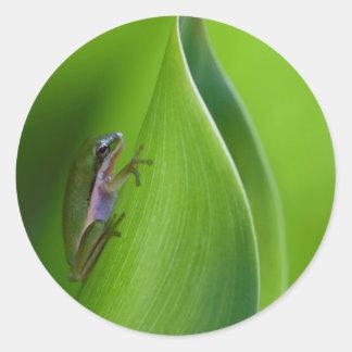 USA, Georgia, Savannah, Tiny Frog On A Leaf Round Sticker