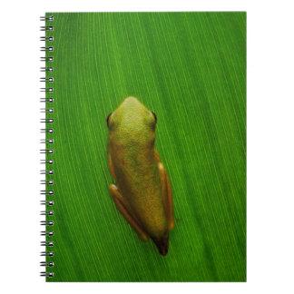 USA, Georgia, Savannah, Tiny Frog On Leaf Note Books