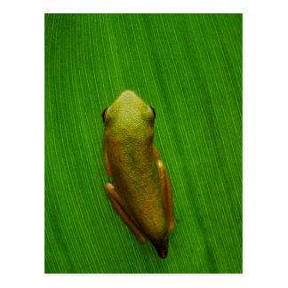 USA, Georgia, Savannah, Tiny Frog On Leaf Postcard