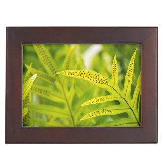 USA, Hawaii, Big Island. Tropical Green Fern Memory Boxes