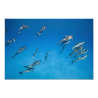 USA, Hawaii, Big Island, Underwater view of 2 Art Photo