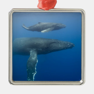 USA, Hawaii, Big Island, Underwater view of Christmas Ornament