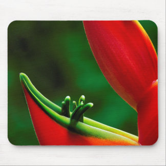 USA, Hawaii, Hilo. Heliconia Mouse Mat
