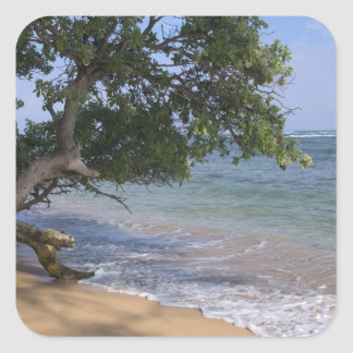USA, Hawaii, Kauai, beach scenic. RF) Square Sticker