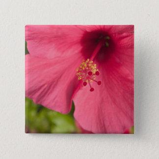 USA, Hawaii, Kauai, Hibiscus 15 Cm Square Badge
