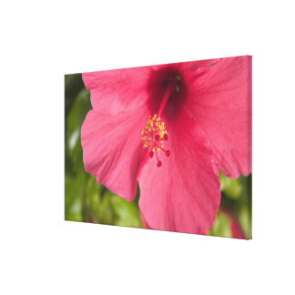 USA, Hawaii, Kauai, Hibiscus Canvas Print