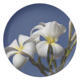 USA, Hawaii, Kauai, white plumeria. Plate
