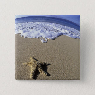 USA, Hawaii, Maui, Makena Beach, Starfish and 15 Cm Square Badge