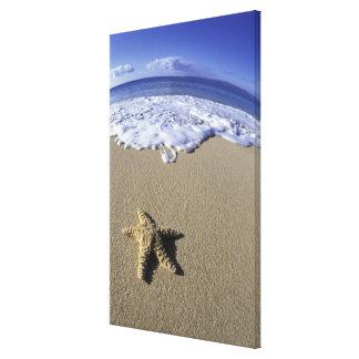 USA, Hawaii, Maui, Makena Beach, Starfish and Canvas Print