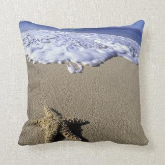 USA, Hawaii, Maui, Makena Beach, Starfish and Cushion