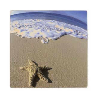 USA, Hawaii, Maui, Makena Beach, Starfish and Maple Wood Coaster