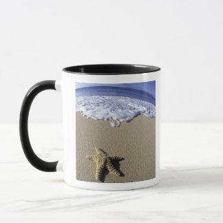 USA, Hawaii, Maui, Makena Beach, Starfish and Mug