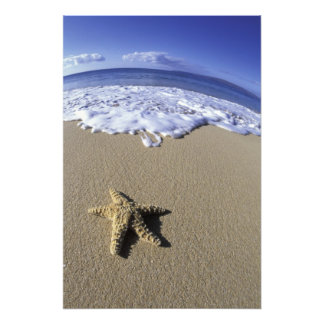 USA, Hawaii, Maui, Makena Beach, Starfish and Photo Print