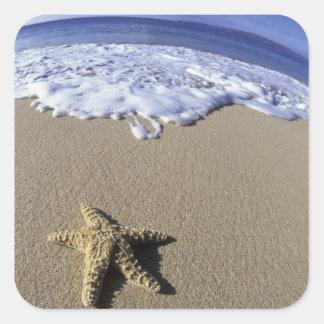 USA, Hawaii, Maui, Makena Beach, Starfish and Square Sticker