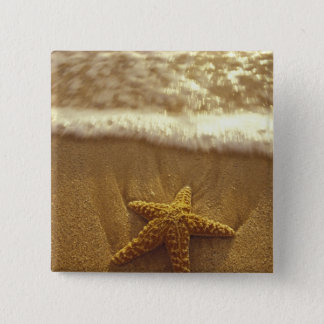 USA, Hawaii, Maui, Maui, Kihei, Starfish and 15 Cm Square Badge