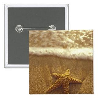USA, Hawaii, Maui, Maui, Kihei, Starfish and 15 Cm Square Badge