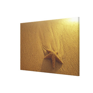 USA, Hawaii, Maui, Maui, Kihei, Starfish and Canvas Print