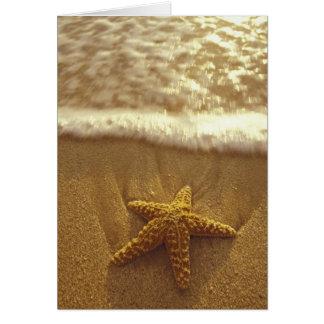 USA, Hawaii, Maui, Maui, Kihei, Starfish and Card