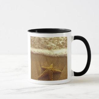 USA, Hawaii, Maui, Maui, Kihei, Starfish and Mug