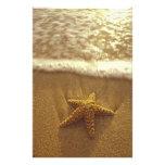 USA, Hawaii, Maui, Maui, Kihei, Starfish and Photographic Print