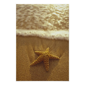 USA, Hawaii, Maui, Maui, Kihei, Starfish and Poster
