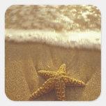 USA, Hawaii, Maui, Maui, Kihei, Starfish and Square Sticker