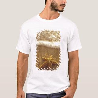 USA, Hawaii, Maui, Maui, Kihei, Starfish and T-Shirt
