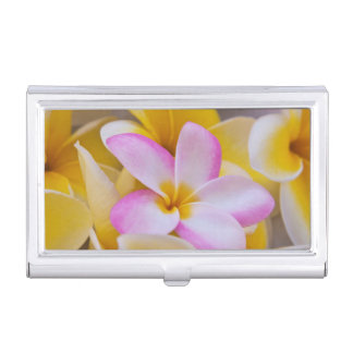 USA, Hawaii, Oahu, Plumeria flowers in bloom 1 Business Card Holder