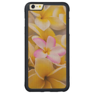 USA, Hawaii, Oahu, Plumeria flowers in bloom 1 Carved Maple iPhone 6 Plus Bumper Case