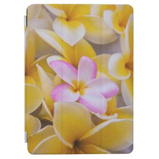 USA, Hawaii, Oahu, Plumeria flowers in bloom 1 iPad Air Cover